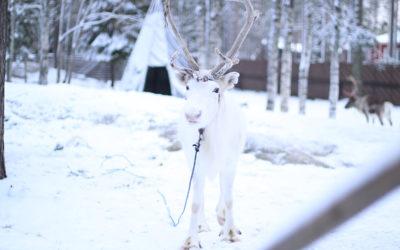 Yrittäjyyttä ja aluekehitystä Rovaniemellä